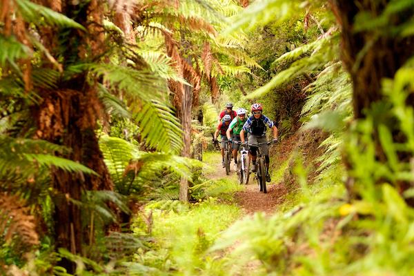 Kawakawa Bay Bike Track, Rotorua