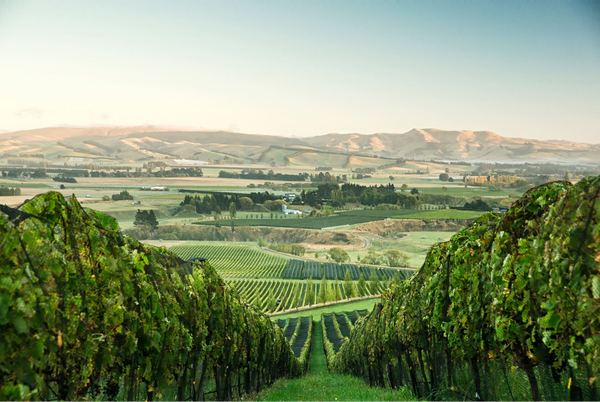 Greystone Wines, North Canterbury