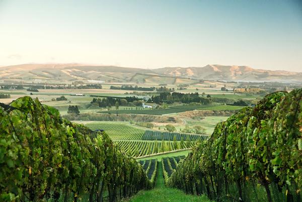 Greystone Wines, North Canterbury