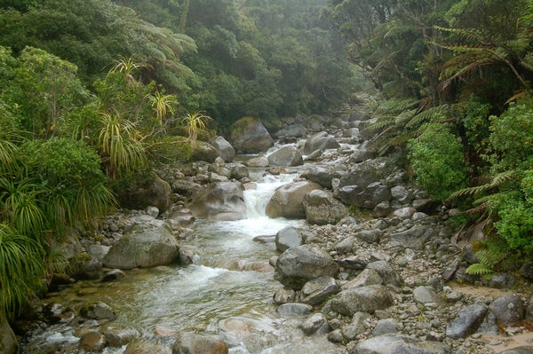 Heaphy Track