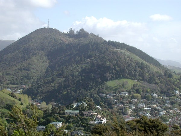 New Zealand Walk