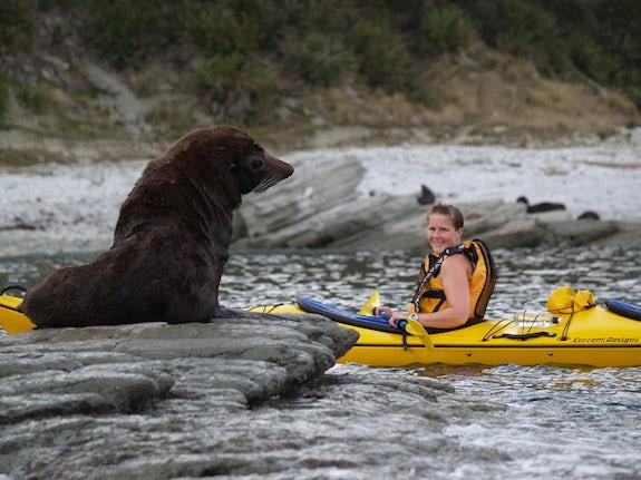 Seal Viewing
